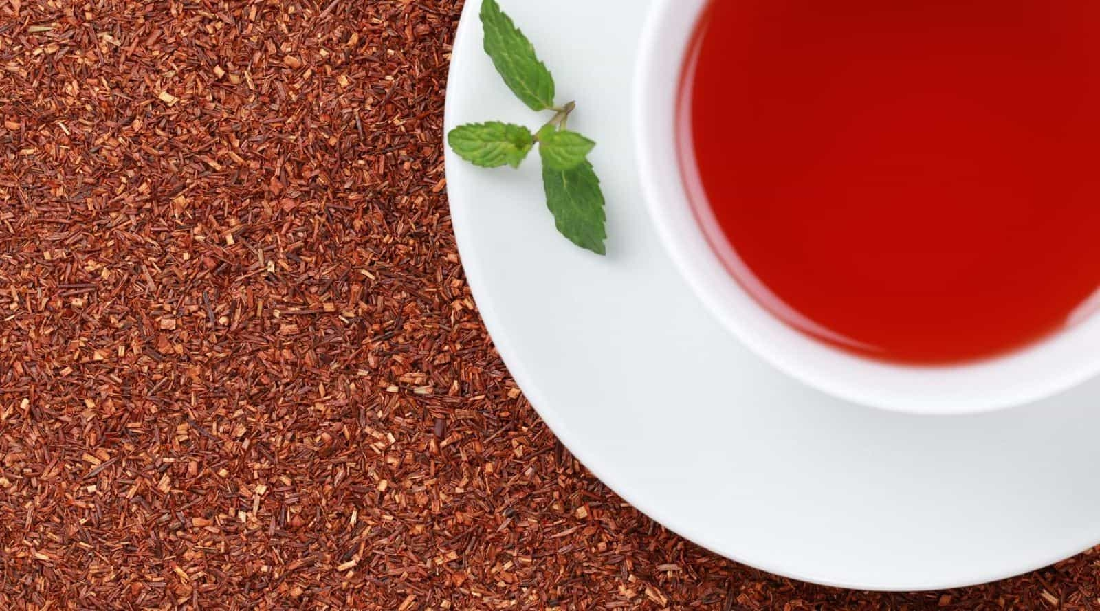 rooibos tea: a new lease of life