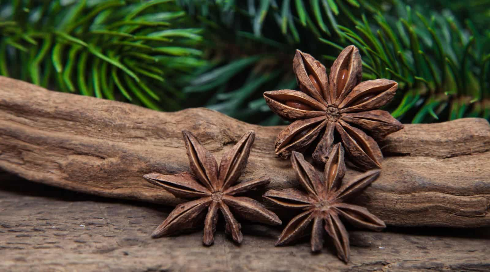everything you need to know about star anise tea
