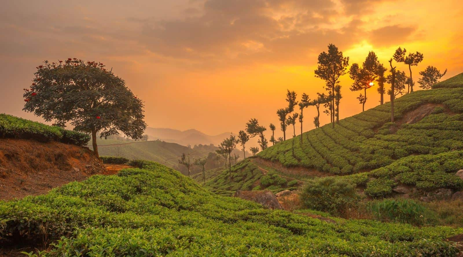 what is tea terroir and how does it affect the tea's aroma and flavor?
