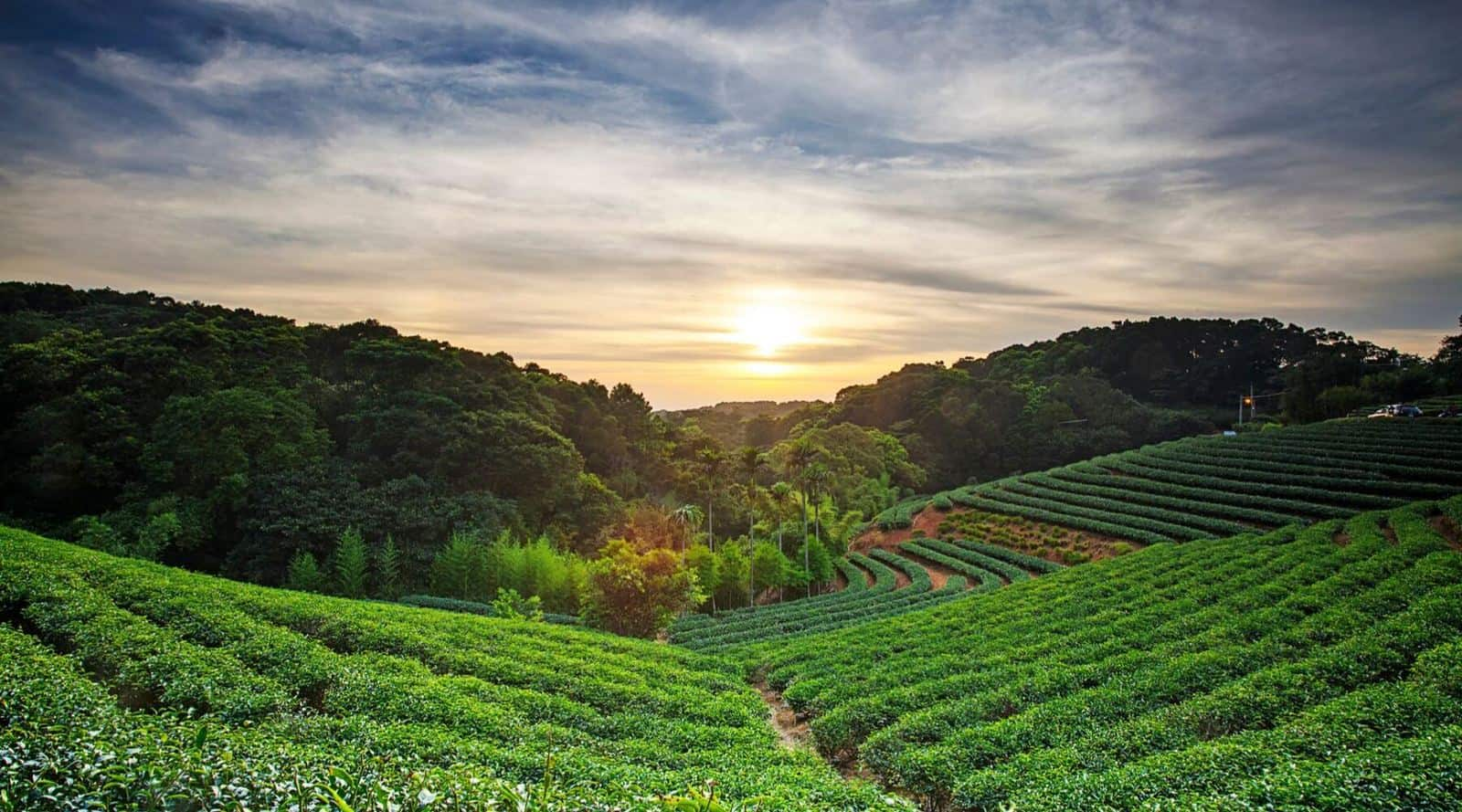 tea tour: best tea tourism destinations