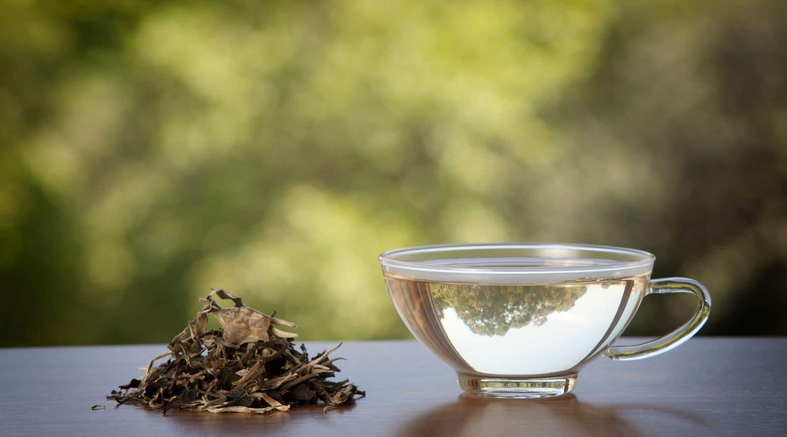 what is white tea? origins, taste and more